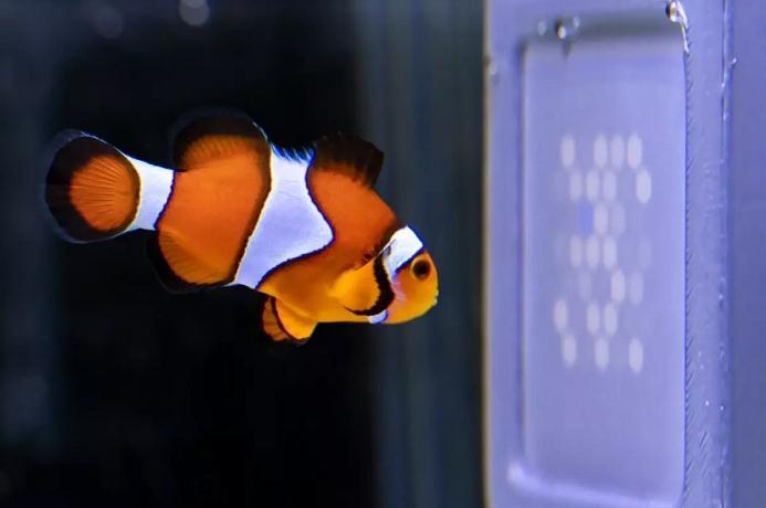 混合紫色和紫外像素,科学家用LED屏研究动物的环境视觉感知